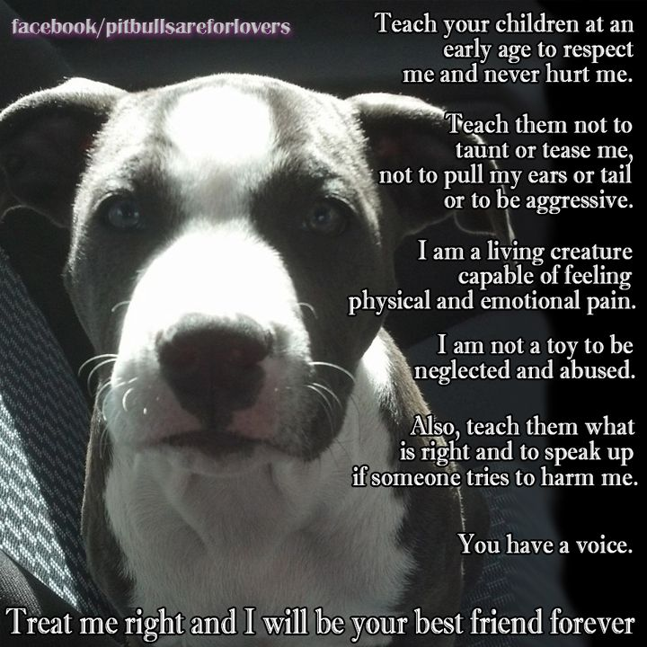 Teach your kids to respect ALL animals! - photo#28