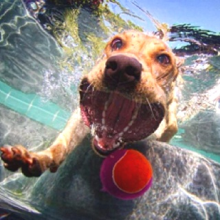 A dog fetching his ball underwater:)