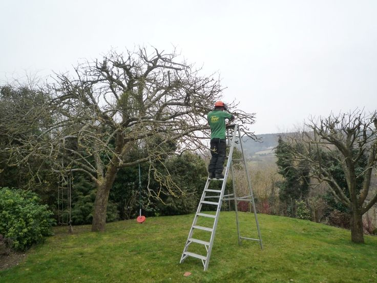 The Fine Art Of Pruning An Apple Tree Trees Pinterest