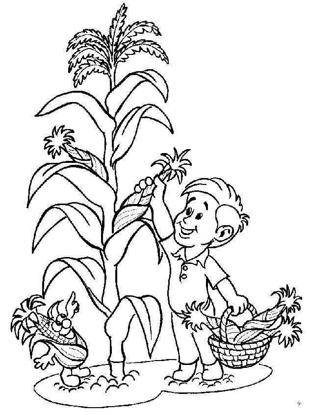 corn plant coloring pages - photo#8