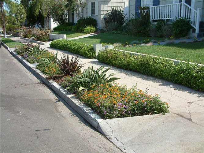Parking strip with lantana