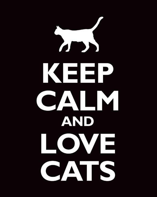 keep calm & love cats | Quotes for Life | Pinterest