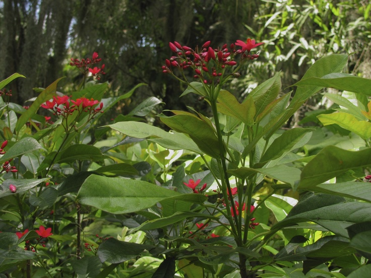 Cypress Gardens Florida Cypress Gardens Pinterest