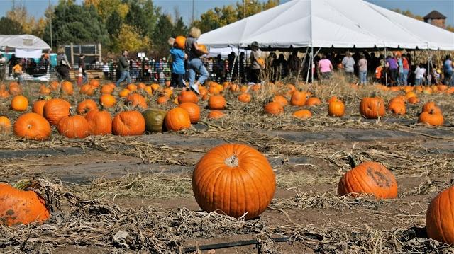 Denver pumpkin patch chatfield Chatfield botanic gardens corn maze