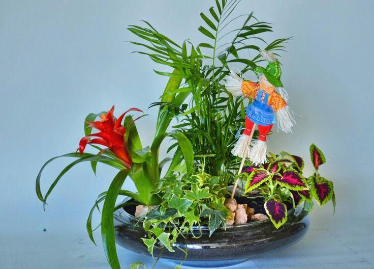 las plantas de interior son mas bonitas con flores