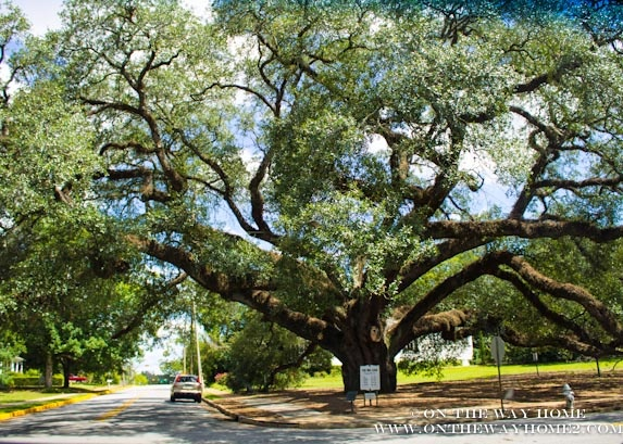 live oak big and beautiful singles Big d ninth-largest city in the united states  explore places to live, the best d magazine dallas neighborhoods.