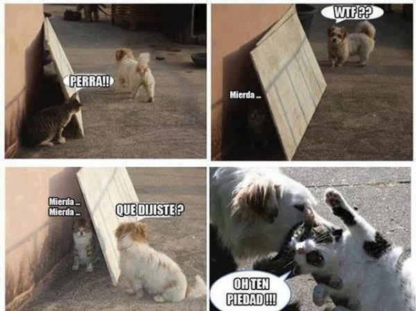 Memes en espa ol graciosos y memes espa ol pinterest for Pinterest en espanol