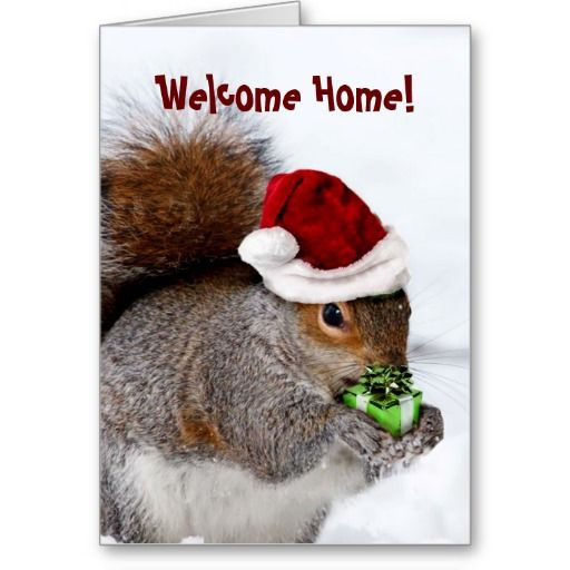 Welcome Home Christmas Squirrel Greeting Card: pinterest.com/pin/489555421965255536