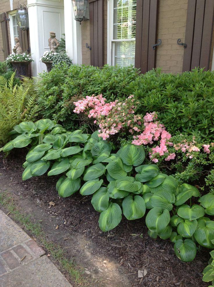 Hosta garden ideas daily knick knacks 4 1 11 flickr for Hosta garden designs