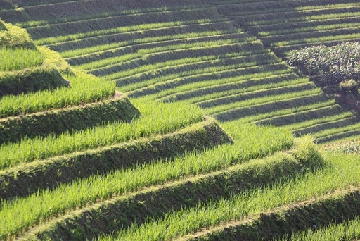 Terrace rice fields japan japanese farming and japanese for Terrace cultivation