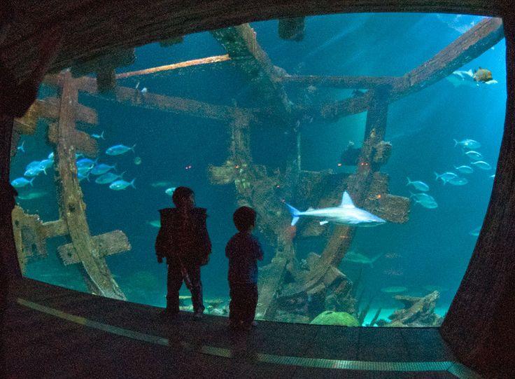 Shark Reef Mandalay Bay Las Vegas Las Vegas Nv Pinterest