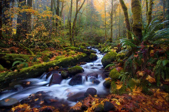 Fog, Cascades, stream, autumn, oregon, gorge