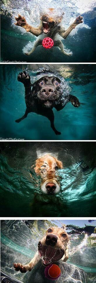Dogs underwater... cute concept! Pets Pinterest