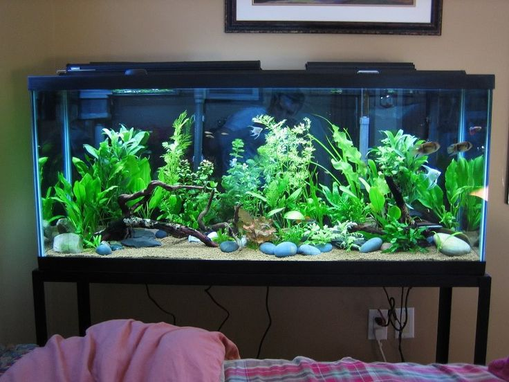 Planted 55 gallon the planted tank pinterest for 55 gallon aquarium decoration ideas