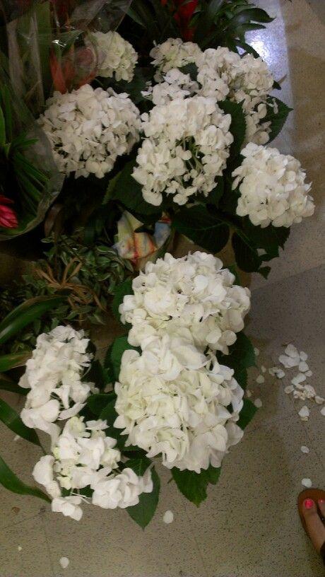 Hydrandea On Sale At Kroger Wedding Ideas Pinterest