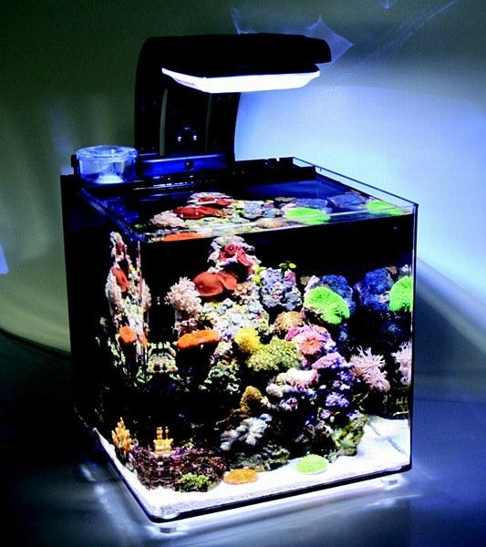 Tmc micro habitat 30 litre nano aquarium bajo el agua for Aquarium recifal nano