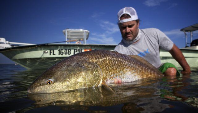 Pin by on redfish pinterest for Buy louisiana fishing license online