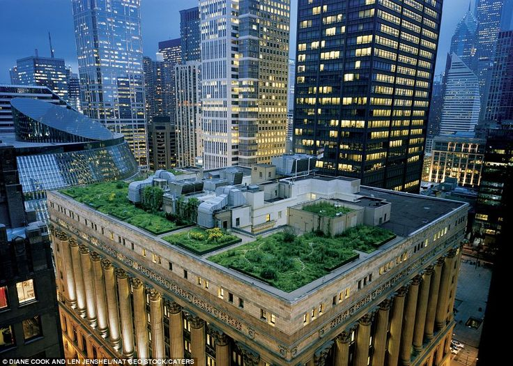 Rooftop garden on top of Chicago's City Hall.