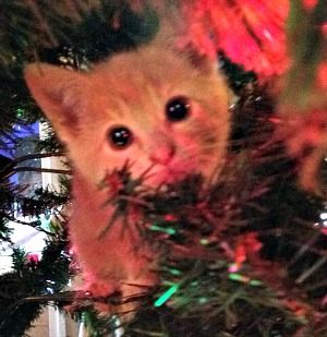 Chester kitty in the Christmas tree. | cats | Pinterest