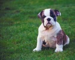 Man Spends Over $60,000 In Dog Custody Battle