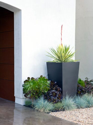 Modern Landscaping With Succulents : Some succulents and a pot in the corner small backyard