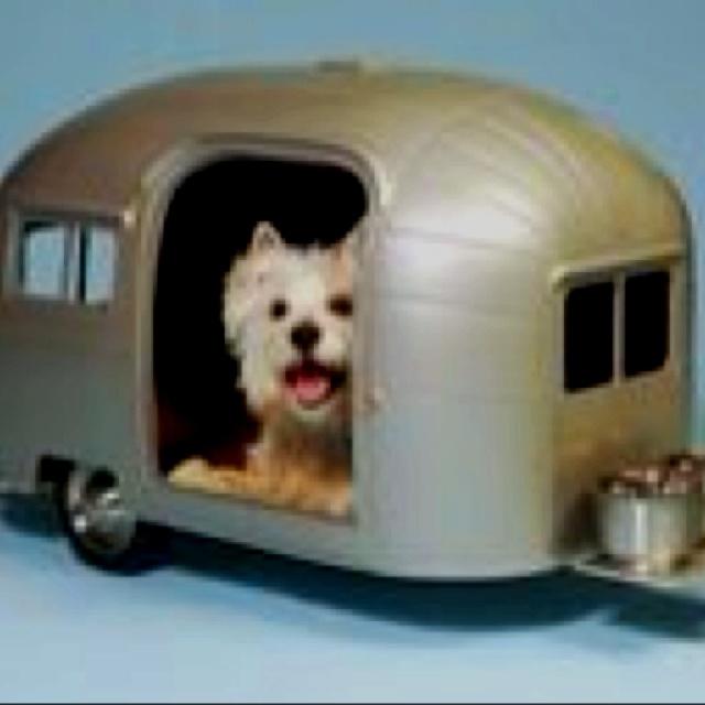 Cute dog house life in texas pinterest