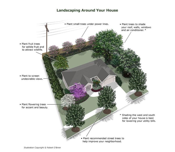 Planting Around Your House : Where to plant trees around your house useful information pintere