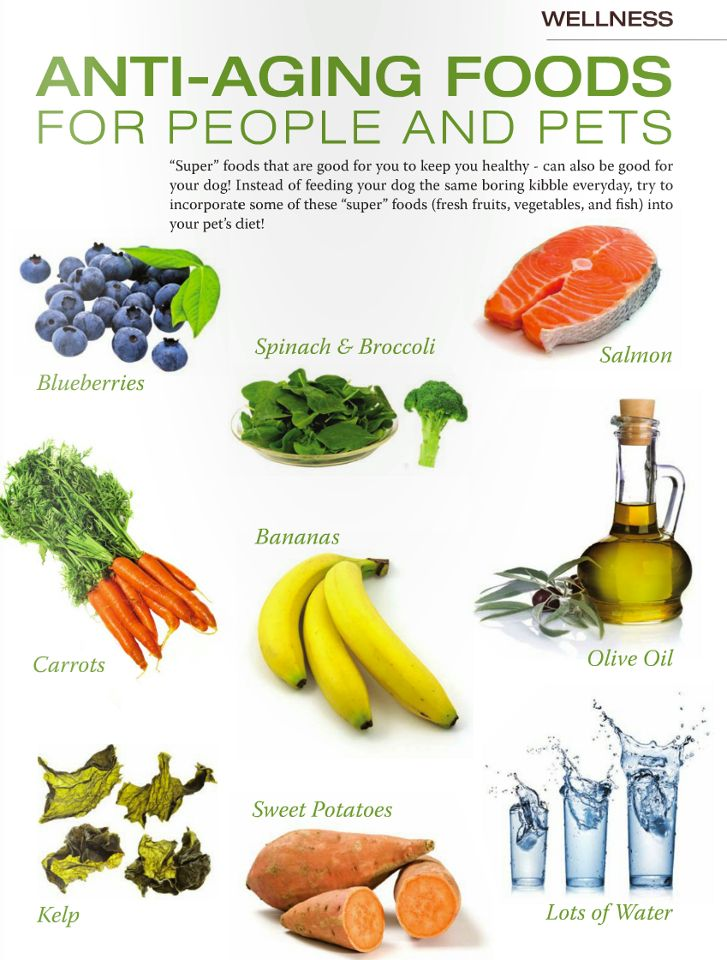 Best Anti Cancet Foods For Dogs