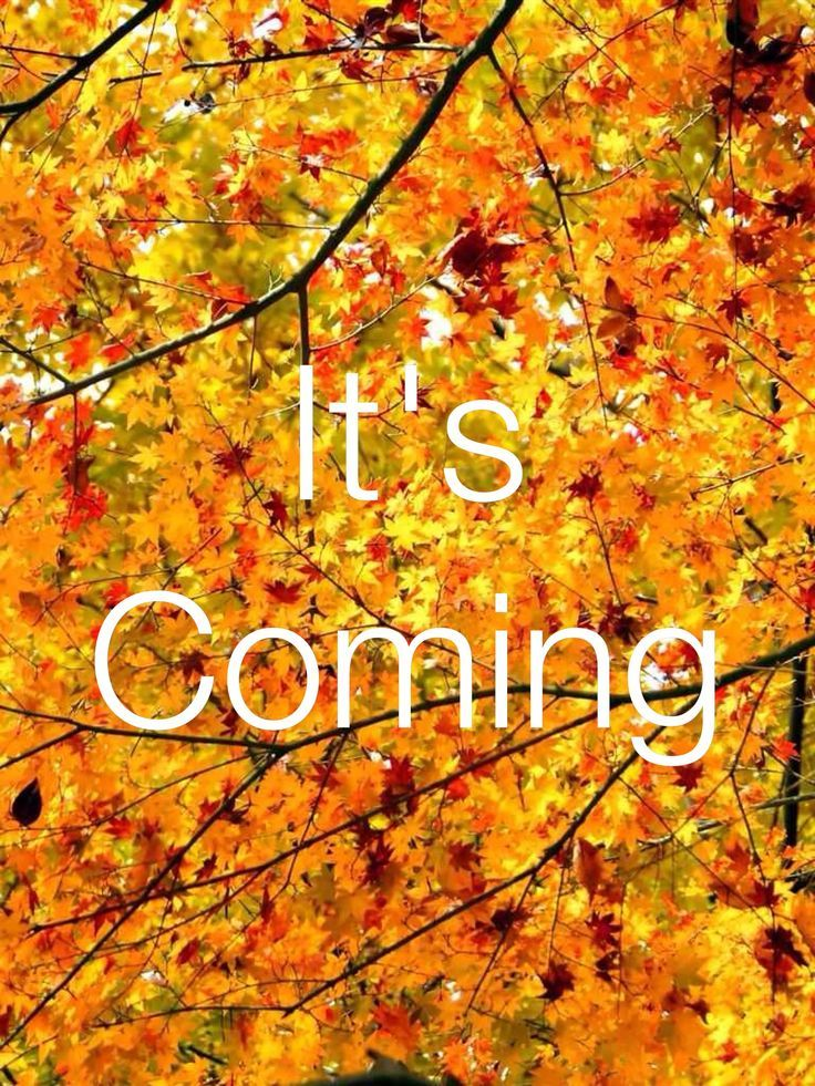 <b>Fall</b> <b>is coming</b>
