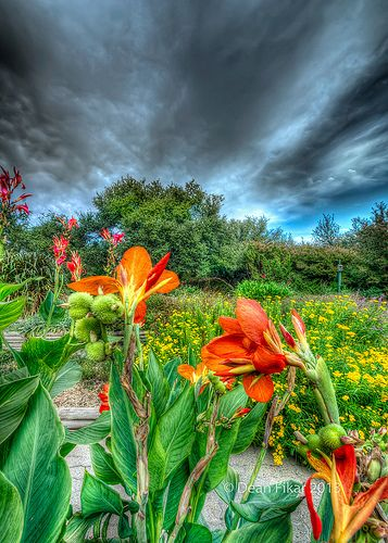 fort worth fort worth botanical garden: