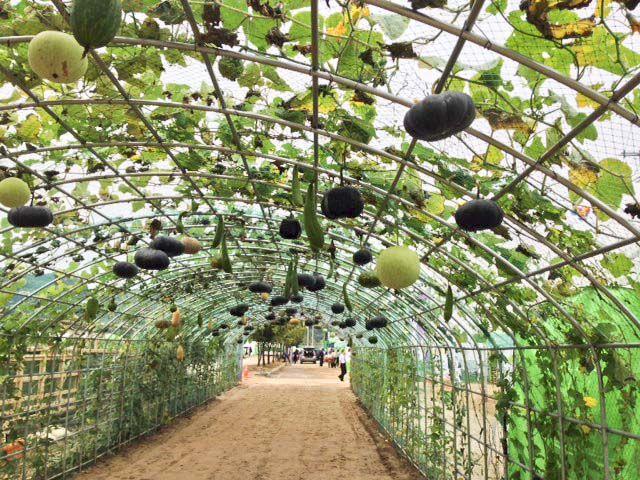 gourd trellis