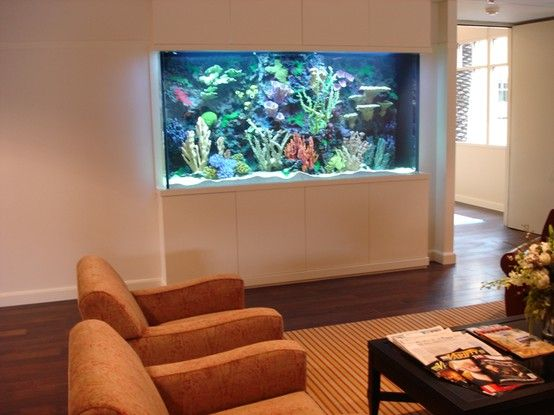 Pin by ainsley ratcliff on for the home pinterest for Fish tank in wall
