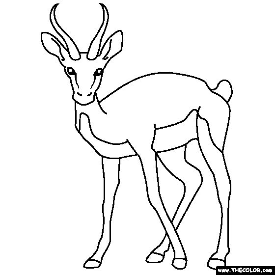 gazelle coloring pages - photo#10