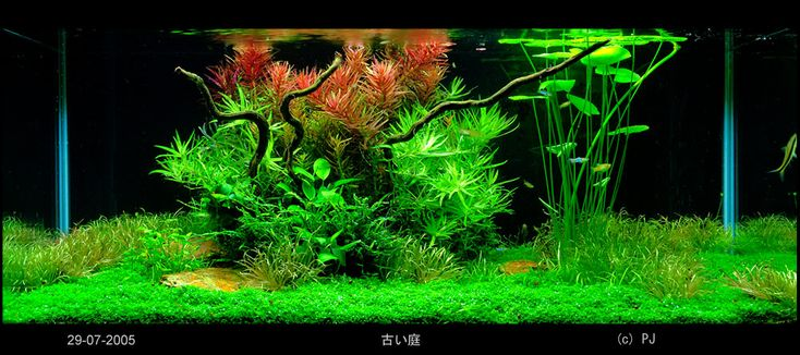dutch tank aquarium plant aquascape Bubble Pinterest