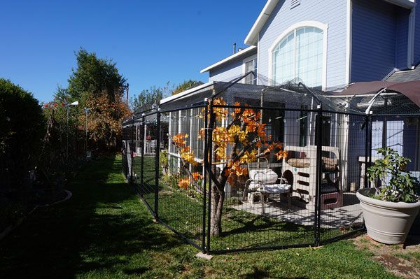 Designed And Built My Dream Catio And You Can Too Catster