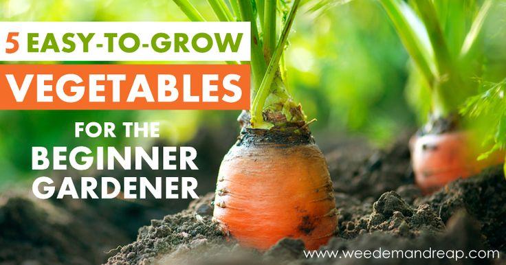 5 Easy To Grow Vegetables For The Beginner Gardener 400 x 300