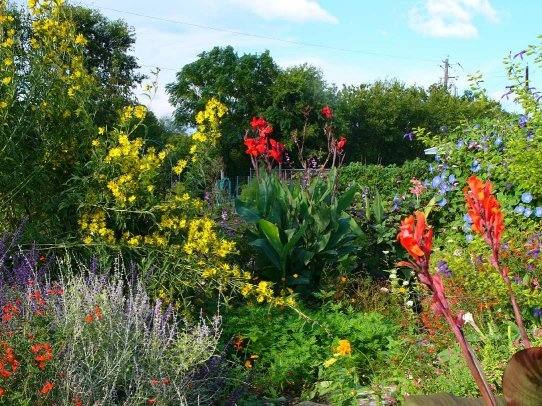 Transform Empty Backyard : SUNSHINE GARDEN Community gardens transform empty lots into green