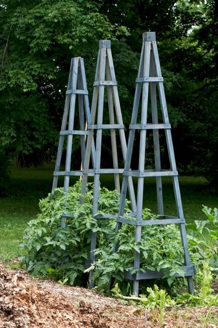For tomatoes box of rain pinterest for Garden obelisk designs