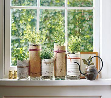 fresh herb in kitchen window in decorated  bottles