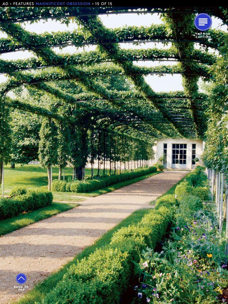 vine Covered walkway SCM Option 3 Pinterest