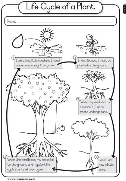 Life Cycle Of A Plant For Kids Worksheet 24426 Iphone De Vanzarefo