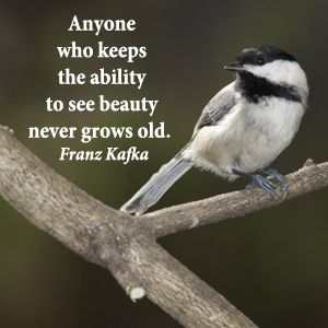 """Anyone who keeps the ability to see beauty never grows old."" -- Franz Kafka – Archetypes are pivotal to the compelling acuity of shared experiences and artistic expressions, the aesthetic of beauty and the power of meaning.  Explore quotes on the grace and power of life's journey at http://www.examiner.com/article/travel-a-road-of-literate-quotes-about-the-journey"