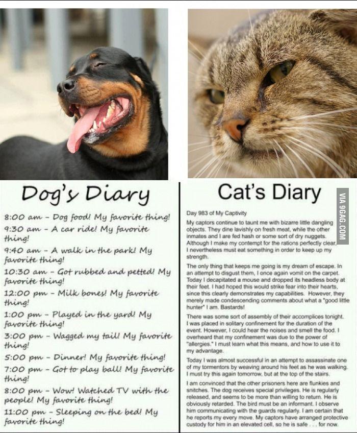 Cat Diary Vs Dog Diary Facebook