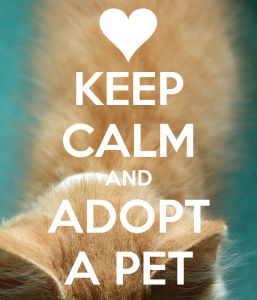 Can a pet change your life essay