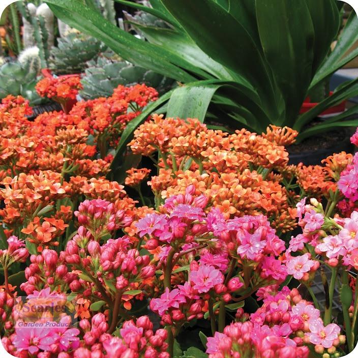 Pin by nhung tran on green inspiration pinterest for Gardening 101 australia