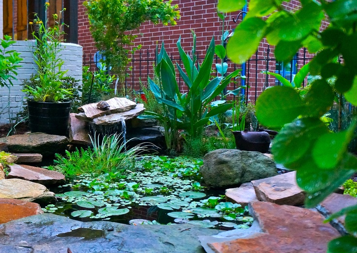 Front yard koi pond the garden pinterest for Front yard fish pond