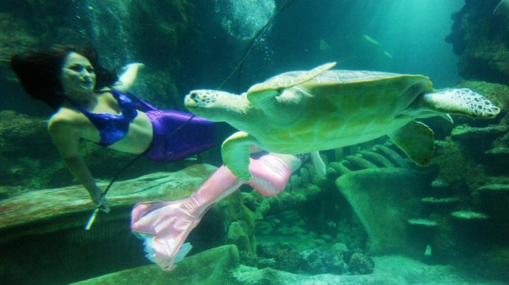 london aquarium valentine's day
