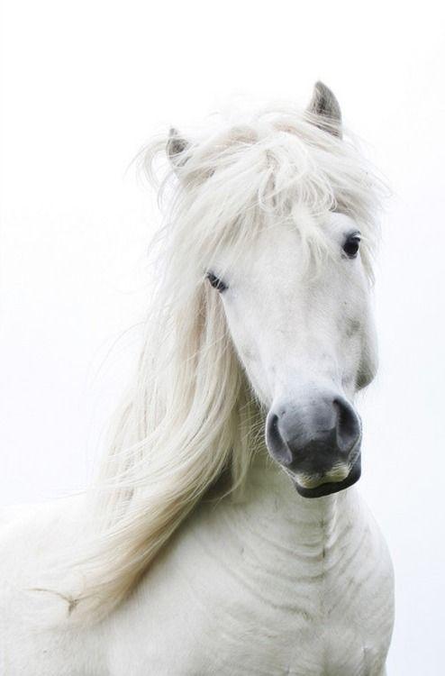 Pretty White Horse | Horses and cowboys | Pinterest