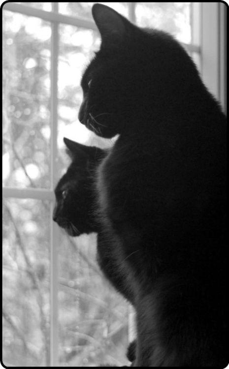 thinking   cats