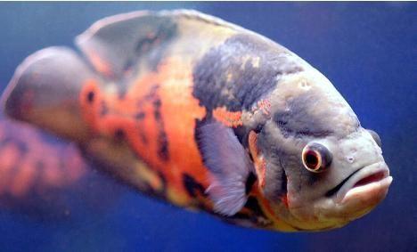 Strange Fish: 12 Unique Freshwater Aquarium Species